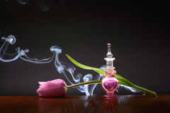 Tulpenaroma Royalty-vrije Stock Fotografie