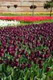 Tulpenbedden in het park Stock Foto