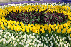 Tulpenbetten im Park lizenzfreies stockbild