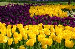 Tulpenbetten im Park lizenzfreie stockfotografie