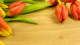 Tulpenblüten im Rot und im Gelb Stockfotos