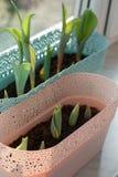 Tulpenblatt mit Tröpfchen Stockbild