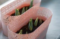 Tulpenblatt mit Tröpfchen Lizenzfreie Stockfotografie