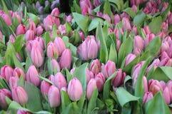 Tulpenbloemen het winkelen Stock Afbeelding