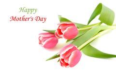 Tulpenbloemen voor moedersdag royalty-vrije stock foto