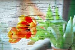 Tulpenblume für Karte oder Fahne auf Holz stock abbildung