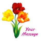 Tulpenblumen-Designhintergrund Stockbilder