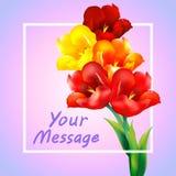 Tulpenblumen-Designhintergrund Lizenzfreie Stockfotos