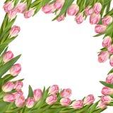 Tulpenblumen-Frühlingsgrenze ENV 10 Lizenzfreie Stockbilder