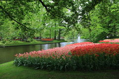 Tulpenblumen, keukenhof Garten Holland Stockfotos