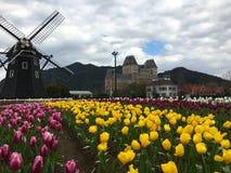 Tulpenblumenfeld vor einer Windmühle lizenzfreies stockfoto