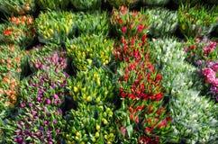 Tulpenblumensträuße ganz vorbei Lizenzfreie Stockfotos