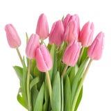 Tulpenblumenstrauß lokalisiert Stockbild