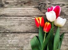 Tulpenbos op de donkere achtergrond van schuur houten planken Stock Foto's