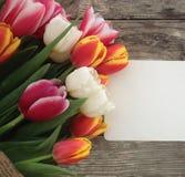 Tulpenbos op de donkere achtergrond van schuur houten planken Stock Fotografie