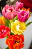 Tulpendetail royalty-vrije stock foto's