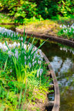 Tulpenfeld adnd alte Mühlen im netherland Lizenzfreie Stockfotos