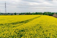 Tulpenfeld und alte Mühlen im netherland Stockfotos