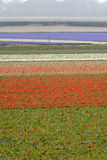 Tulpenfelder im Frühjahr Lizenzfreies Stockfoto