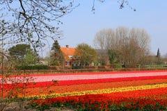 Tulpenfelder nahe Keukenhof lizenzfreie stockbilder