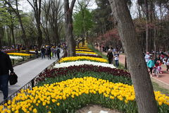 Tulpenfestival, emirgan park Istanboel Turkije Royalty-vrije Stock Fotografie