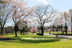 Tulpengarten bei Showa Kinen KoenShowa Memorial Park, Tachikawa, Tokyo, Japan im Frühjahr lizenzfreies stockfoto