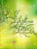 Tulpengarten oder -feld im Frühjahr. Vektor ENV 10 Stockbilder