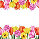 Tulpenkaart stock illustratie