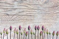 Tulpenknospen auf Holzoberfläche mit Patina Lizenzfreie Stockbilder