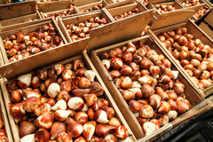 Tulpenmarkt Stock Afbeeldingen