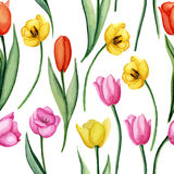 Tulpenpatroon vector illustratie