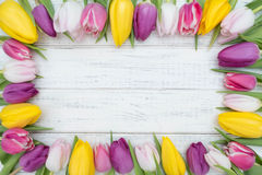 Tulpenrahmen Stockfotos