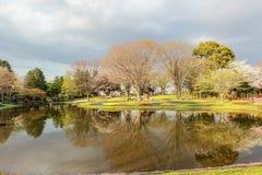 Tulpentuin in Showa Kinen KoenShowa Memorial Park, Tachikawa, Tokyo, Japan in de lente Stock Foto's