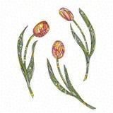 Tulpenvektorillustration Die gezeichnete Hand blüht Hintergrund Lizenzfreies Stockfoto