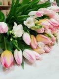 Tulps et freesias sensibles image stock