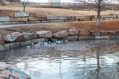 Tulsa, Oklahoma - February 17, 2018. Shameful litter and debris pollutes a water pond in a city park. This local city park has unsightly litter polluting its Stock Images