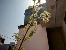 Tulsi植物在冬天季节的白天摄影 库存照片