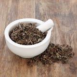 Tulsi Basil Herb Stock Image