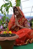 Tulsi worship in Bhopal. Tulsi or Tulasi Ocimum tenuiflorum or Holy Basil is a sacred plant in Hindu belief. Hindus regard it as an earthly manifestation of the Stock Photo
