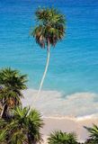Tulum дезертировало карибский пляж Стоковая Фотография RF