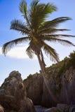 Tulum beach palm tree in Riviera Maya at Mayan. Mexico royalty free stock photos