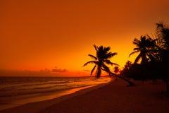 Tulum beach sunset palm tree Riviera Maya. Tulum beach sunset palm tree in Riviera Maya at Mayan Mexico stock photography