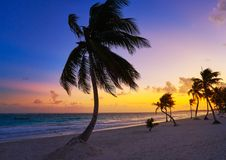 Tulum beach sunset palm tree Riviera Maya. Tulum beach sunset palm tree in Riviera Maya at Mayan Mexico royalty free stock photos
