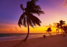 Tulum beach sunset palm tree Riviera Maya. Tulum beach sunset palm tree in Riviera Maya at Mayan Mexico royalty free stock photography