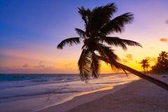 Tulum beach sunset palm tree Riviera Maya. Tulum beach sunset palm tree in Riviera Maya at Mayan Mexico stock photos