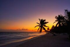 Tulum beach sunset palm tree Riviera Maya. Tulum beach sunset palm tree in Riviera Maya at Mayan Mexico stock images