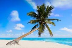 Tulum Caribbean beach in Riviera Maya. Tulum Caribbean turquoise beach palm tree in Riviera Maya of Mayan Mexico royalty free stock photos