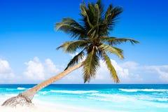 Tulum Caribbean beach in Riviera Maya. Tulum Caribbean turquoise beach palm tree in Riviera Maya of Mayan Mexico stock photography