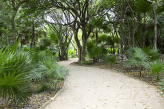Tulum Jungle Walkway. Photo of pathway through tropical forest surrounding Mayan ruins site in Tulum Mexico stock photos