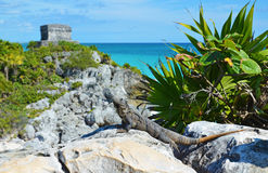 Tulum Maya ruins, Mexico Stock Photography